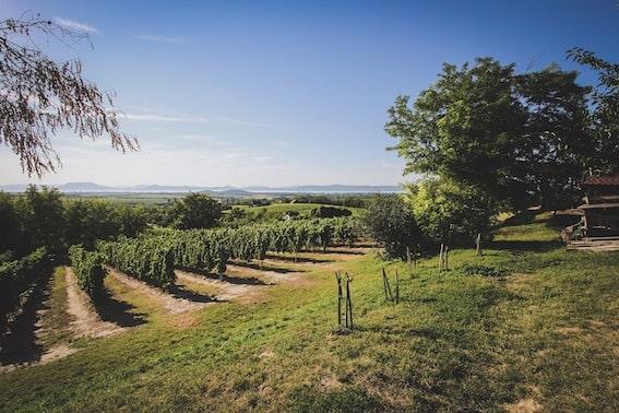 Lake Balaton wines